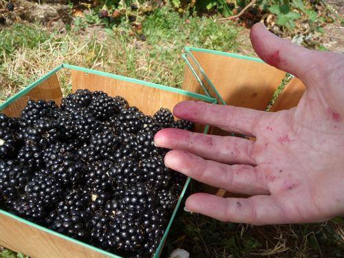 Berries (3)