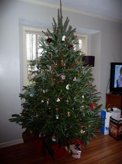 B&K tree
